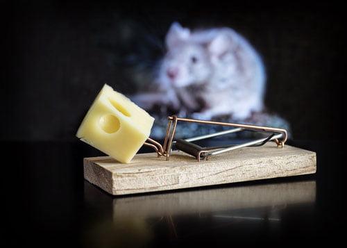muizen vangen en bestrijden